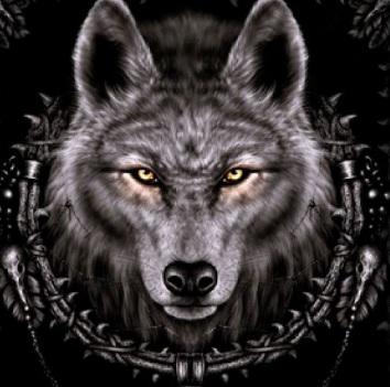 How To Install Wolf Kodi Addon