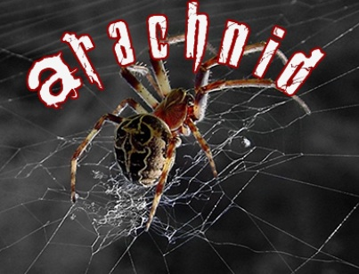 How To Install Arachnid Kodi Addon